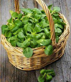 سبزیجات خاص (سبزی والریانلا)