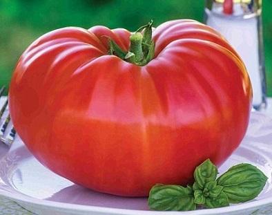 گوجه غول پیکر