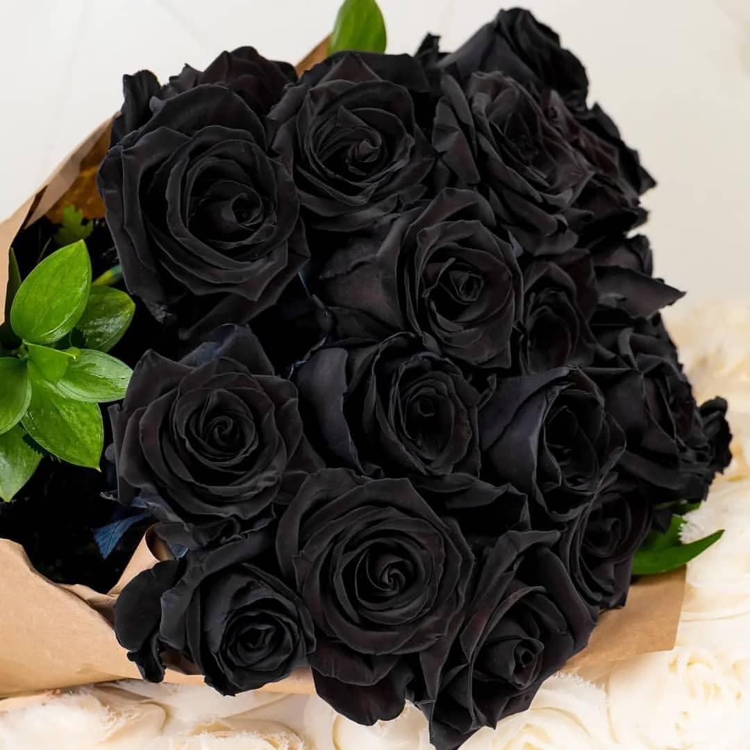 گل زینتی