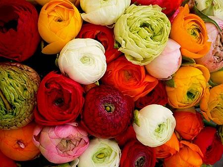 کسب درامد میلونی با پروش گل و گیاه