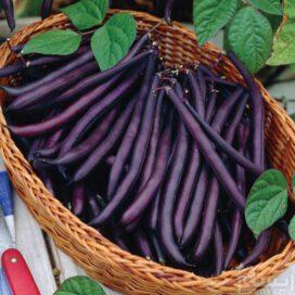 لوبیا بنفش ( سبزیجات خاص )