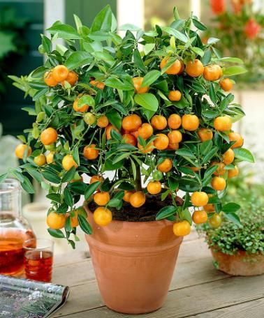 بذر تره و سبزیجات برای کاشت در باغ ، باغچه و گلدان
