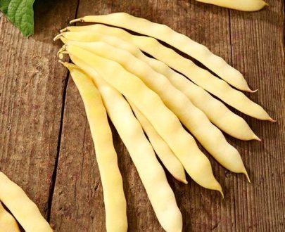بذر لوبیا زرد