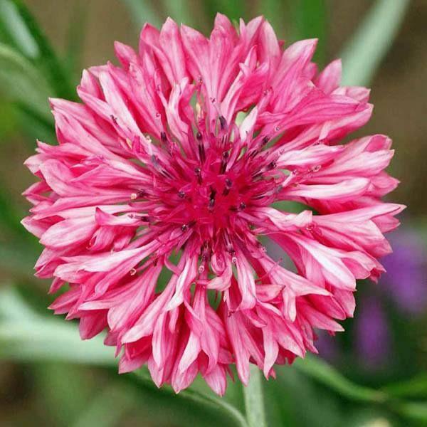 آموزش کاشت بذر انواع گل