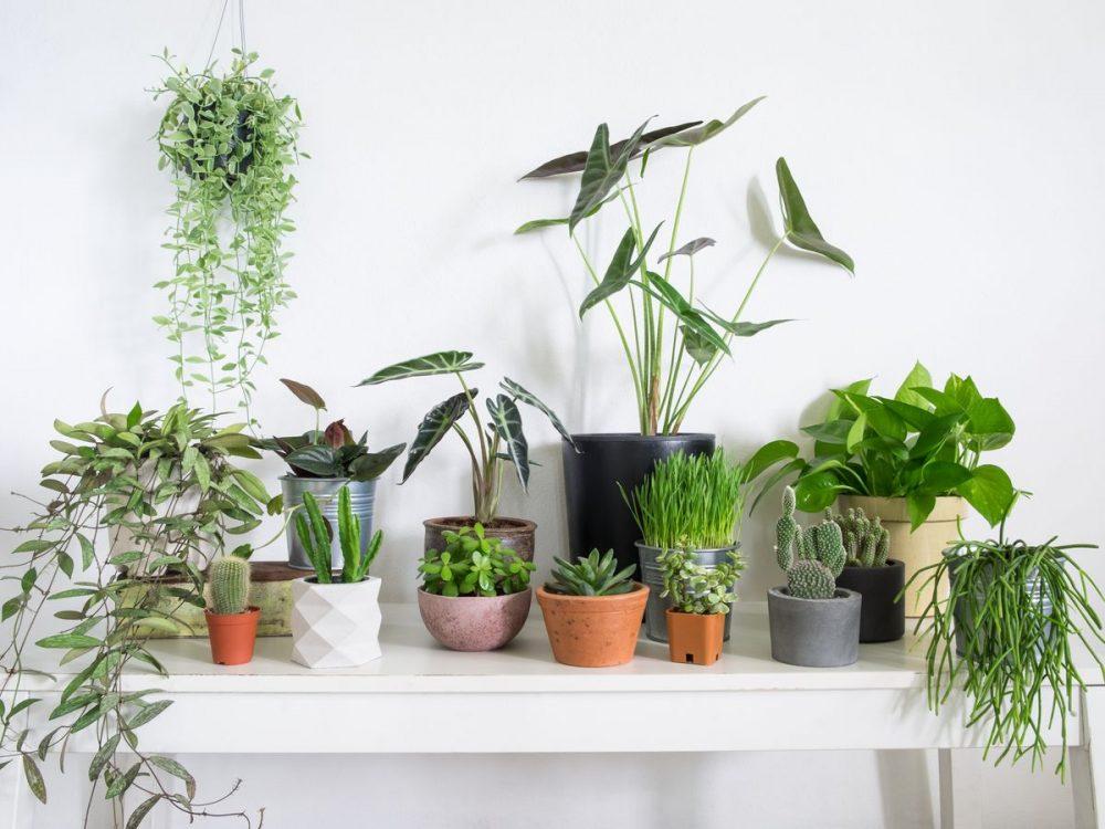 چرا باید در خانه گل و گیاه نگهداری کنیم؟