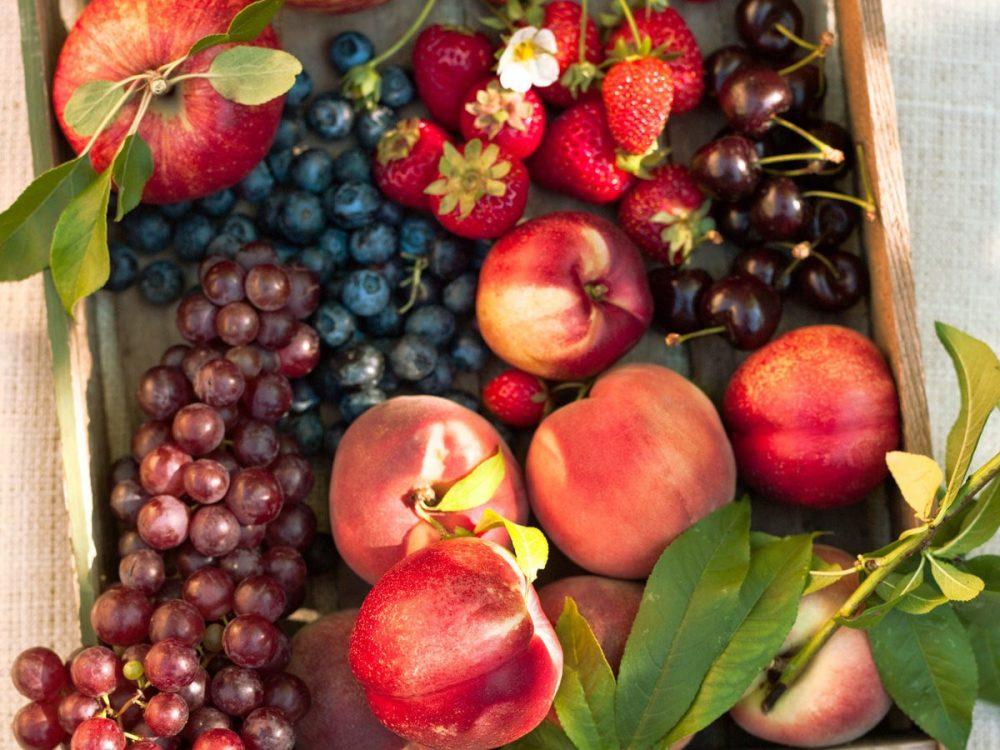 فیلم آموزش کاشت انواع میوه و بلوبری از بذر تا گیاه