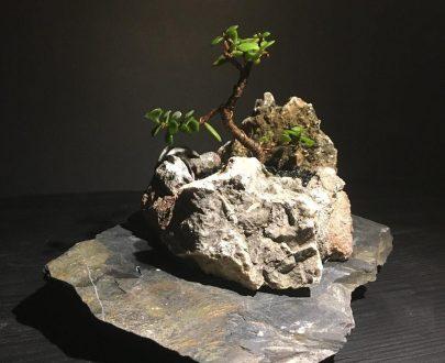 گیاهان خاص