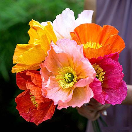 بذر گل زینتی
