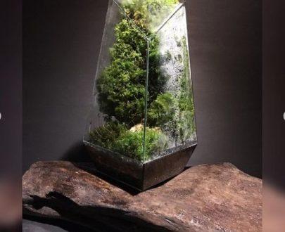 سازه تراریوم جنگل