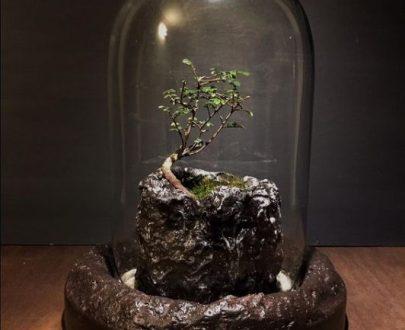 تراریوم تک درخت