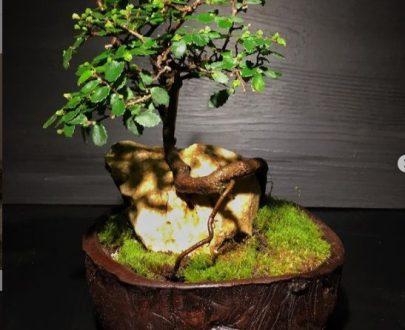 سازه گلدانی ( بونسای و سنگ )