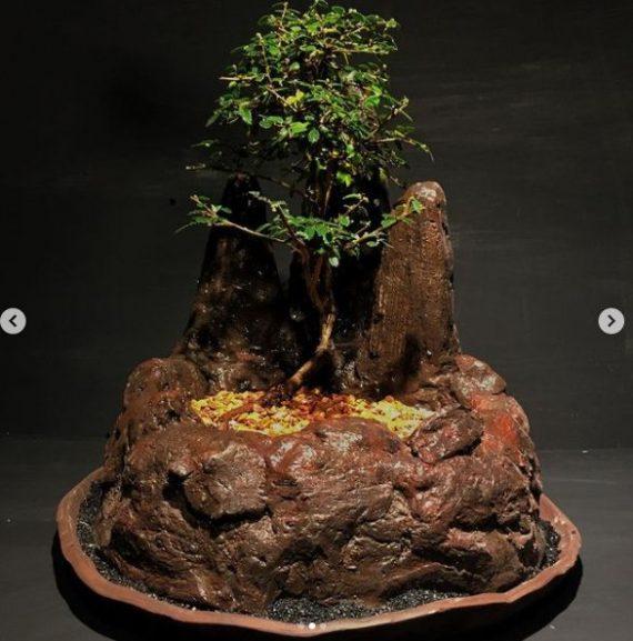ماکت صخره ای بونسای نارون