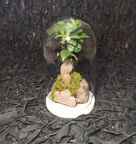 تراریوم درخت کهن