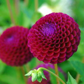 کاشت بذر گل زینتی