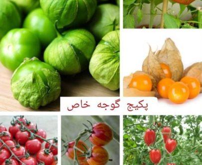 پکیج گوجه