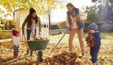 چگونه باغ را برای پاییز اماده کنیم