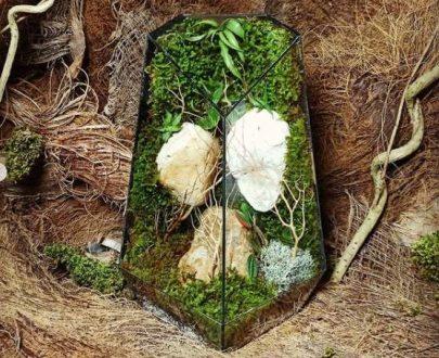 موساریوم جنگل