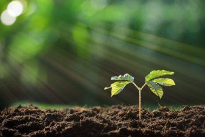 خاک کاشت